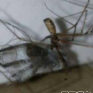 有关蜘蛛的恐怖电影 蜘蛛才是地球上最恐怖生物